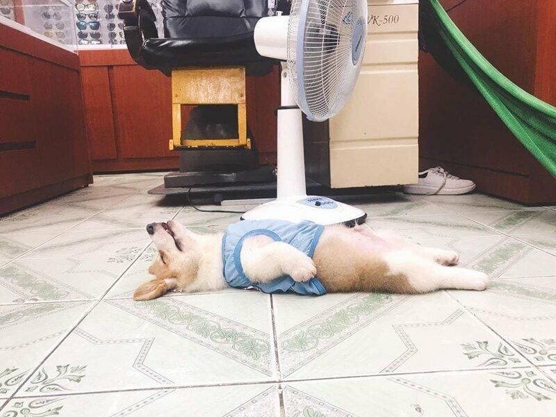 Годи очень любит поваляться на спине, выставив пузико — и его снимки только подтверждают эту привычку
