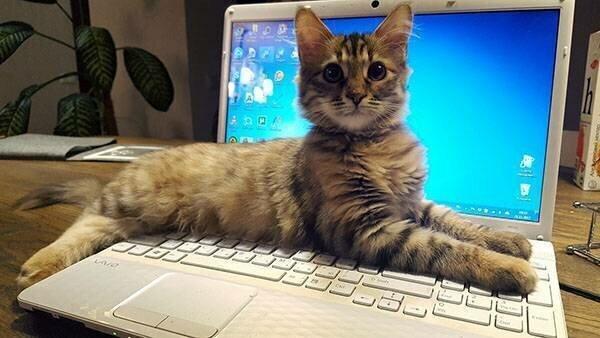 Пора отдохнуть от ноутбука!