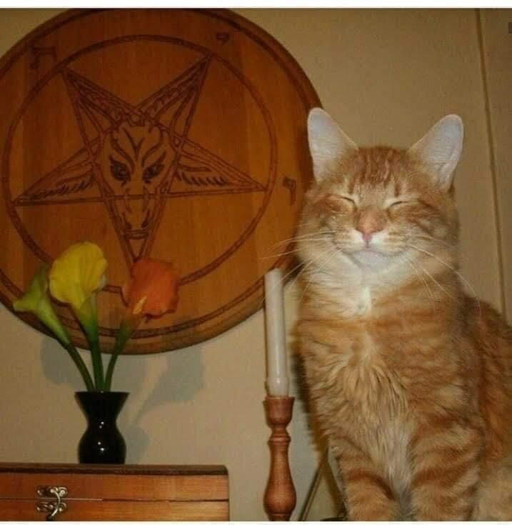 Котики явно знают больше других...