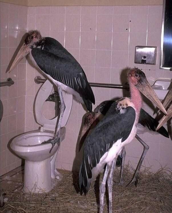 В мужских туалетах часто черт-те что творится...