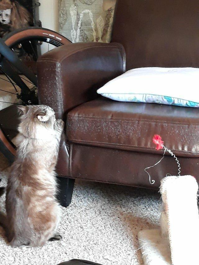 Он сознательно игнорирует когтеточку