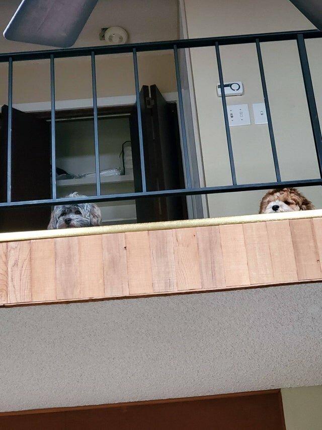 Один раз их покормили наверху, теперь они требуют еду только туда