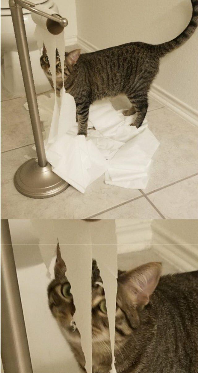 Она так делает каждый раз, если забыли закрыть дверь в ванную