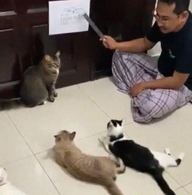 Карантин, день шестой: лекция о коронавирусе для кошек