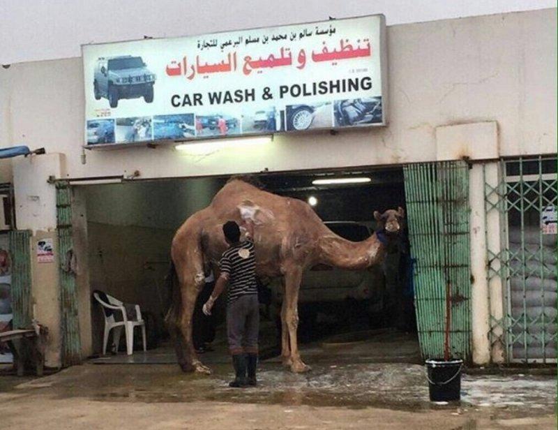 """И такому """"транспорту"""" нужно мыться"""