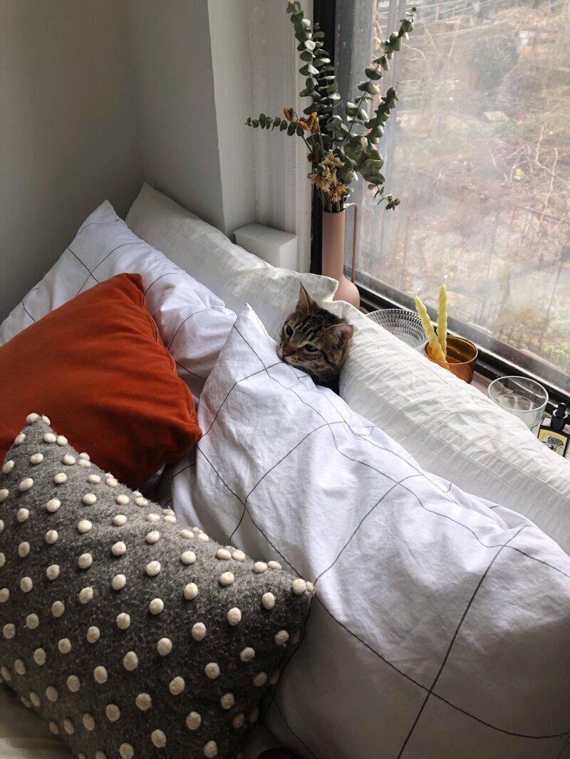 """8. """"Заправила кровать, пошла убираться, и долго не видела кота. Зашла в комнату и увидела это:"""""""