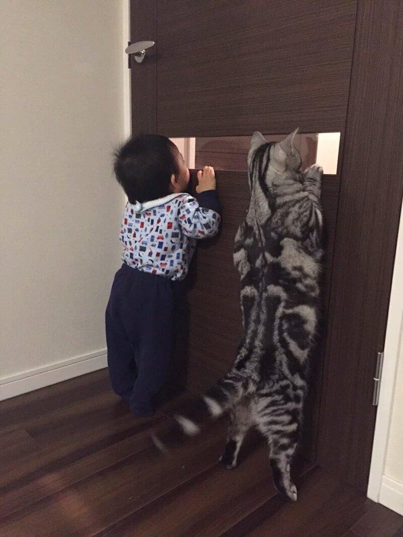 1. Когда вы с котейкой - команда