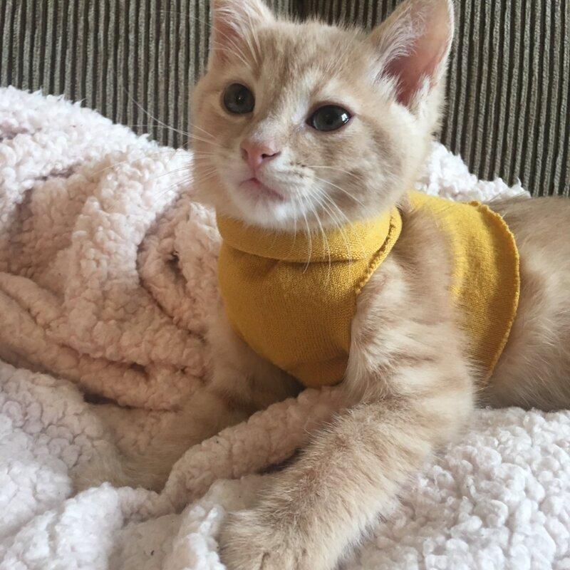"""11. """"Сделала своему котенку свитер, чтобы он не мерз под кондиционером. Взгляните на этого красавца"""""""