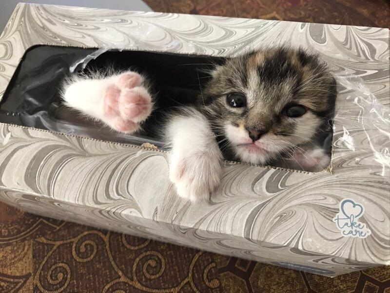 """5. """"Мы час ее искали, а она сладко спала в упаковке из-под салфеток"""""""