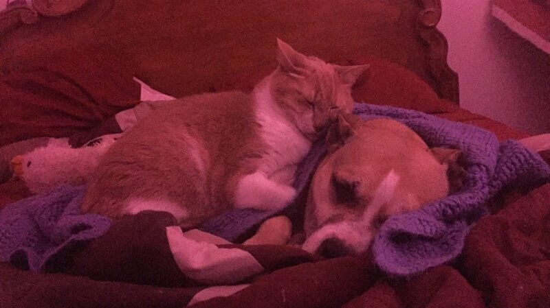 """13. """"Наша собака очень боялась фейерверков, и кот пришел к ней, чтобы успокоить"""""""