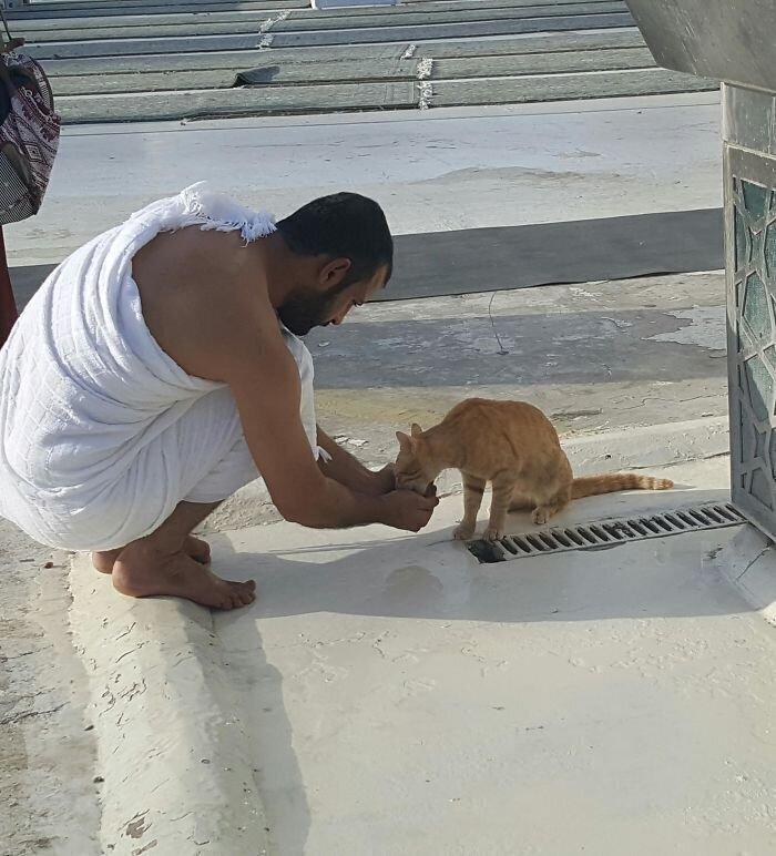 """""""Когда была в Мекке, наблюдала вот такую картину: мужчина поил кота водой из своих ладоней. Просто миски не было"""""""
