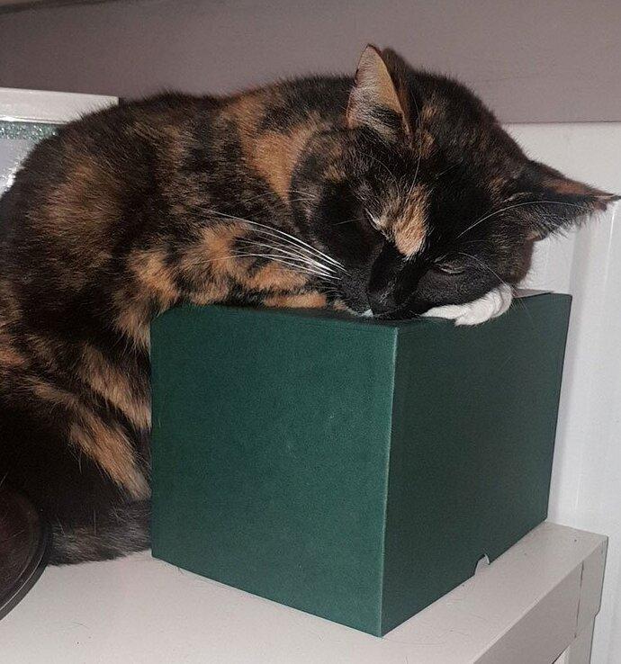 """""""После смерти мамы я забрала ее кошку. Вот она, лежит на коробке с маминым прахом"""""""