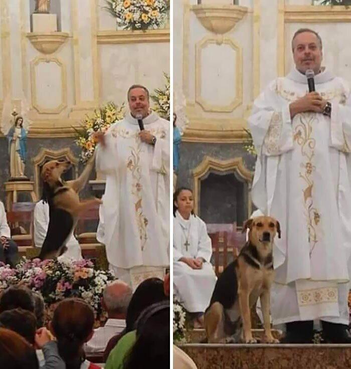 """""""Этот священник приносит в церковь уличных собак, чтобы их кто-нибудь забрал домой"""""""