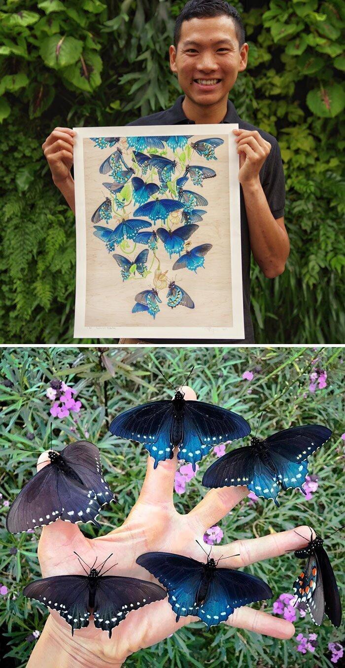 Биолог Тим Вонг увеличил популяцию синего махаона, превратив свой двор в среду обитания для этих бабочек