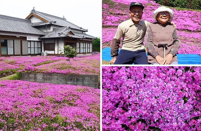 """""""За 2 года он посадил рядом с домом тысячи цветов, чтобы его слепая жена могла почувствовать их аромат и излечиться от депрессии"""""""