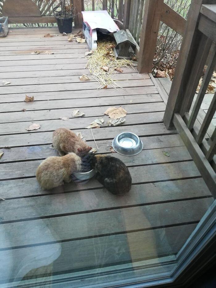 """""""80-летний отец моего мужа: """"Мне нет дела до кошек"""". Он же: """"Я тут им миски поставил... Слушайте, а в этом домике, что я им сделал, они не замерзнут?"""""""