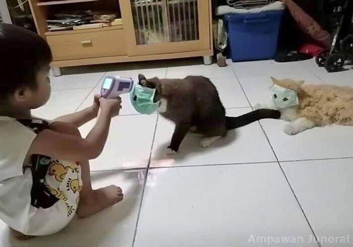 У вас родился ребенок - нервной системе кошек конец