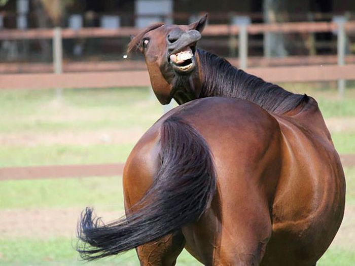 Не все животные годятся в фотомодели