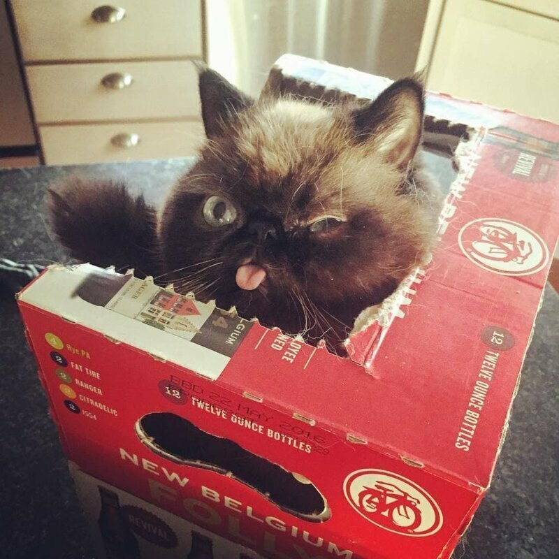 Привет из коробки!