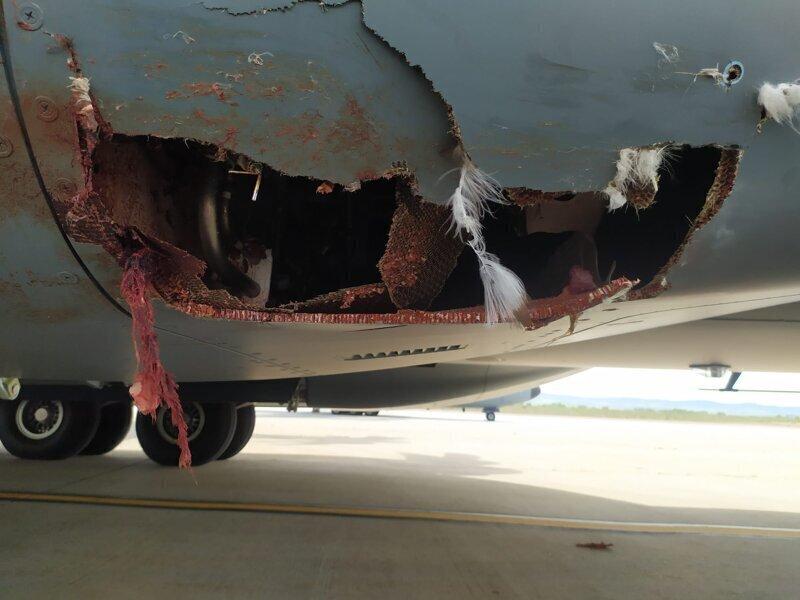 Последствия столкновения самолета и птицы
