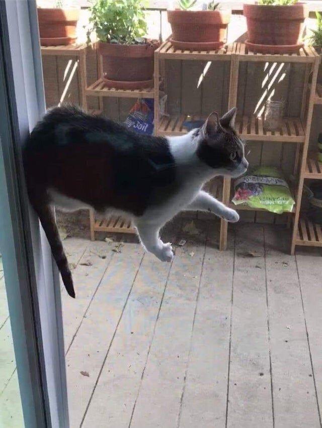 Первая в мире левитирующая кошка?