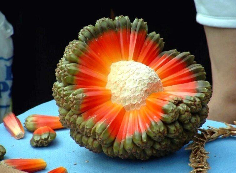 """На фото не кусок инопланетного метеорита, а фрукт под названием """"хала"""", он богат витамином С"""