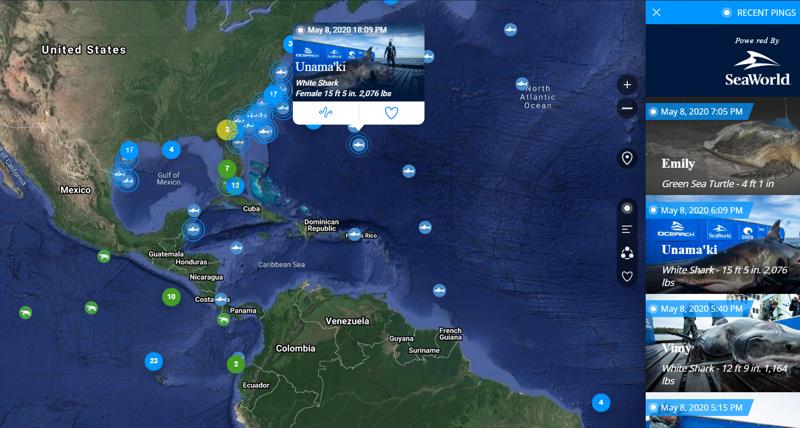 Карта для наблюдения за перемещением белых акул и черепах в реальном времени