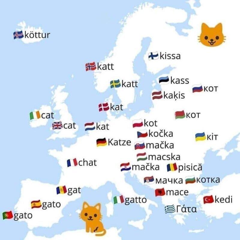 """Слово """"кот"""" на разных языках"""