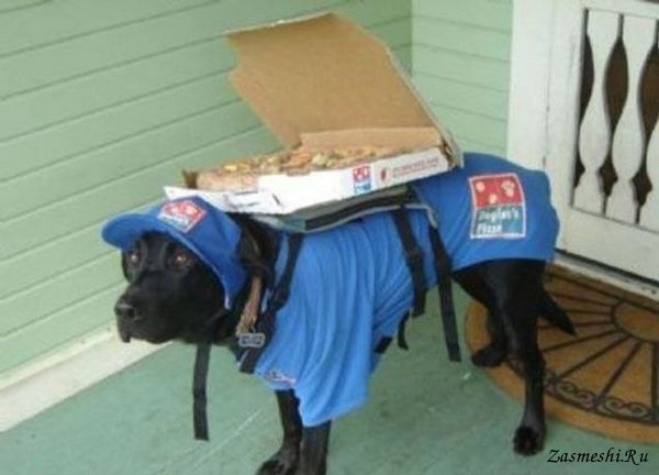 Доставку еды заказывали?