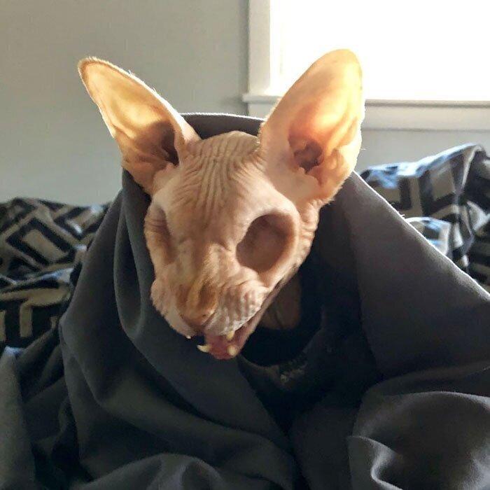 Сфинкс без глаз