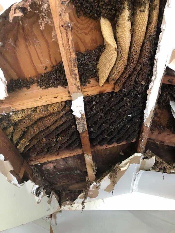 """""""В моем доме опять поселились пчелы. В стенах. Это уже в пятый раз"""""""