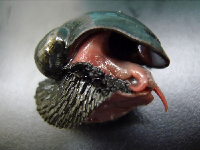 """Это чешуйчатая """"бронированная"""" улитка, которая обитает вблизи глубоководных гидротермальных источников, выделяющих серу, медь, железо и цинк. Ее раковина и нога содержат сульфиды железа"""