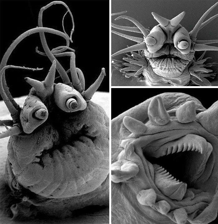Глубоководные морские черви под электронным микроскопом
