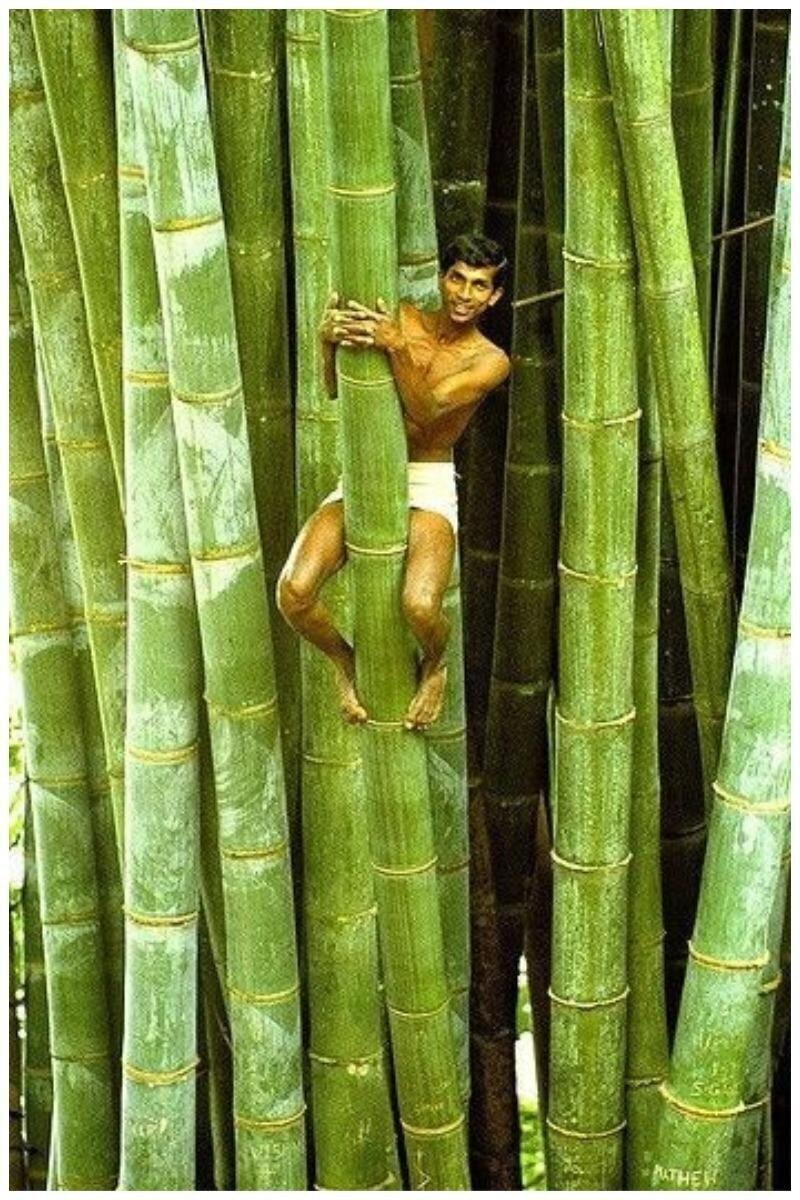 Бамбук - это не только удочка