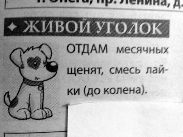 Невиданная порода собак