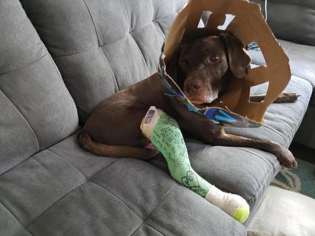Ветеринар полностью поддержал мою идею с воротником и теннисным мячиком