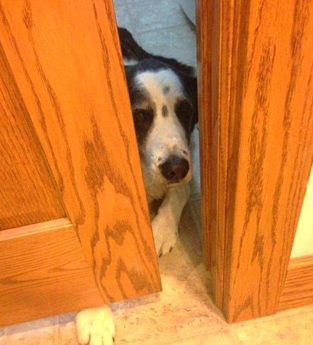 Он очень обижается, когда ему нельзя в комнату