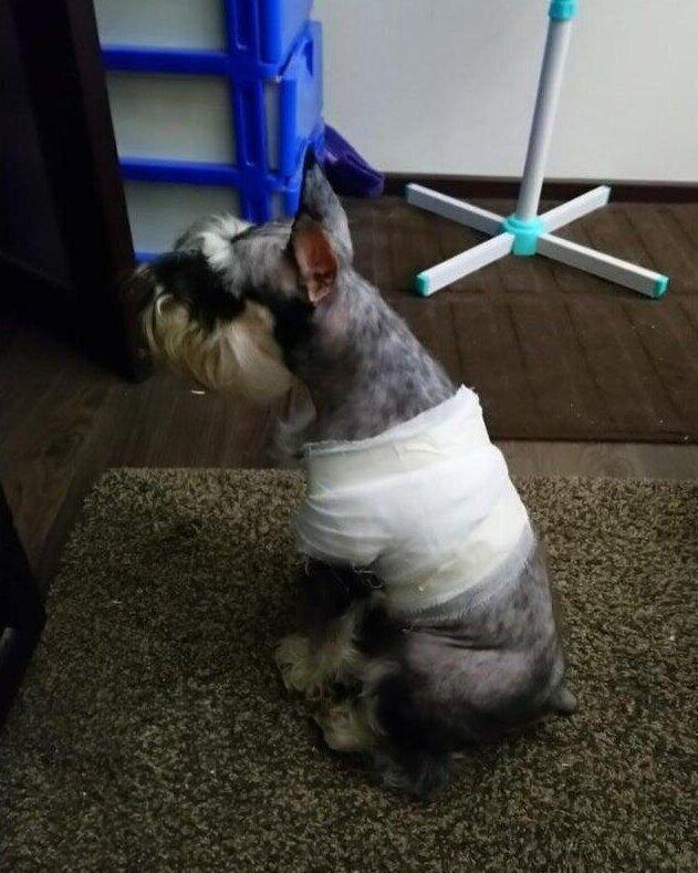 После посещения ветеринара, она всех игнорирует