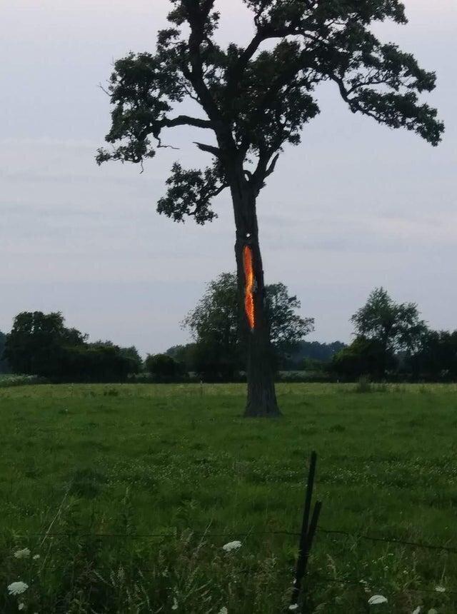 В это дерево недавно ударила молния