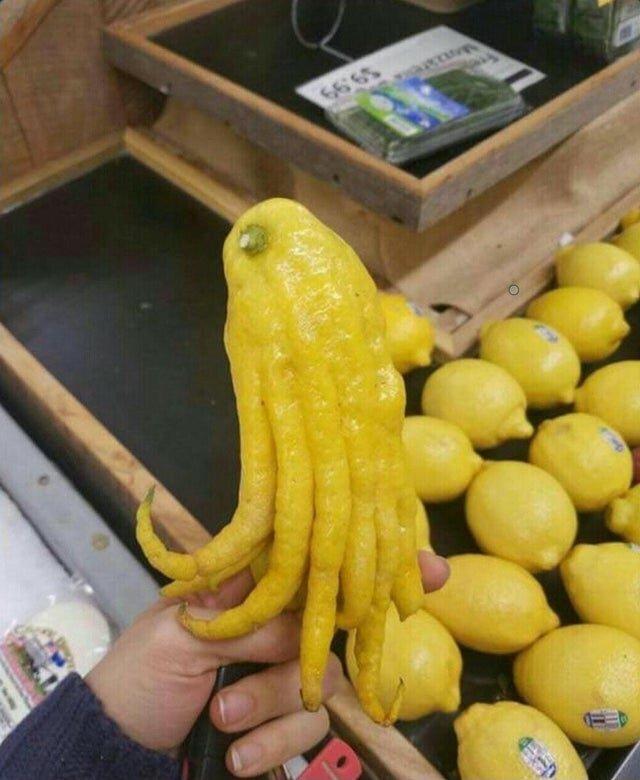 Кракен среди лимонов