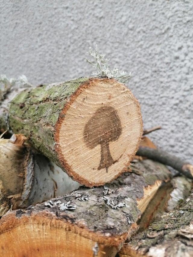 Внутри спиленного дерева оказался рисунок дерева