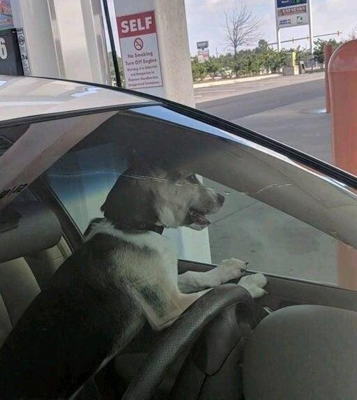 Собака закрылась в машине вместе с ключами. Вызов специалиста обошёлся недёшево!