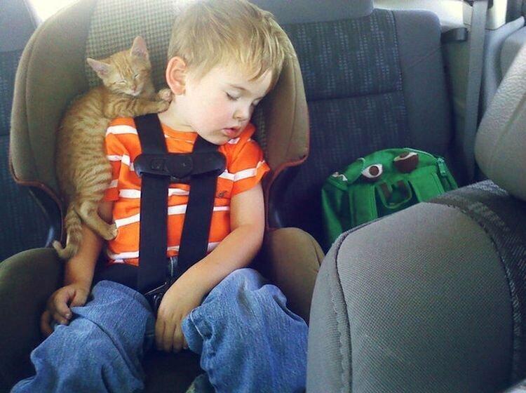 Он любит дремать на плече у сына