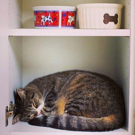 И где только не спали еще кошки и коты