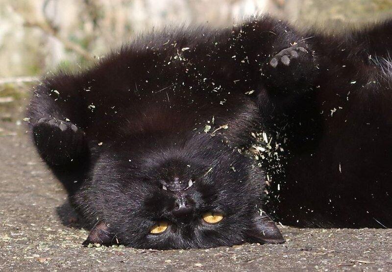 Не хочу быть котом, хочу быть свиньей! И в грязи валяться!