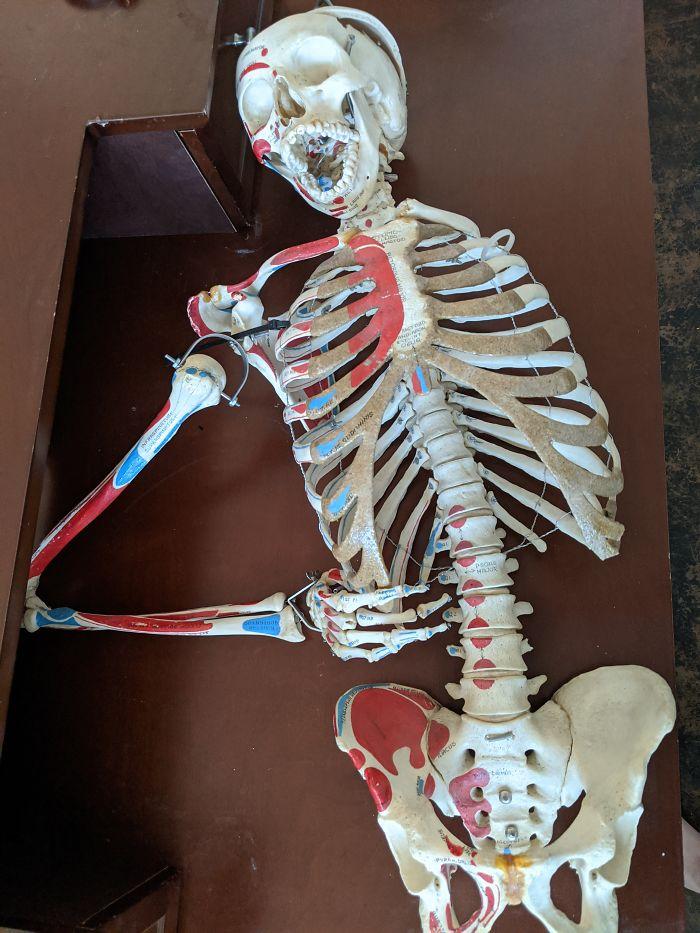 """""""У меня есть настоящий скелет в шкафу. Родственники купили его 30 лет назад на аукционе медицинской школы"""""""
