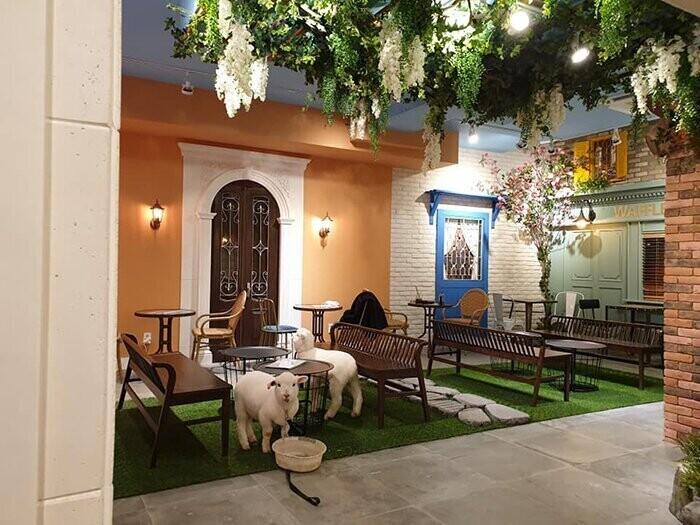 А вы пошли бы отдохнуть в овцекафе?