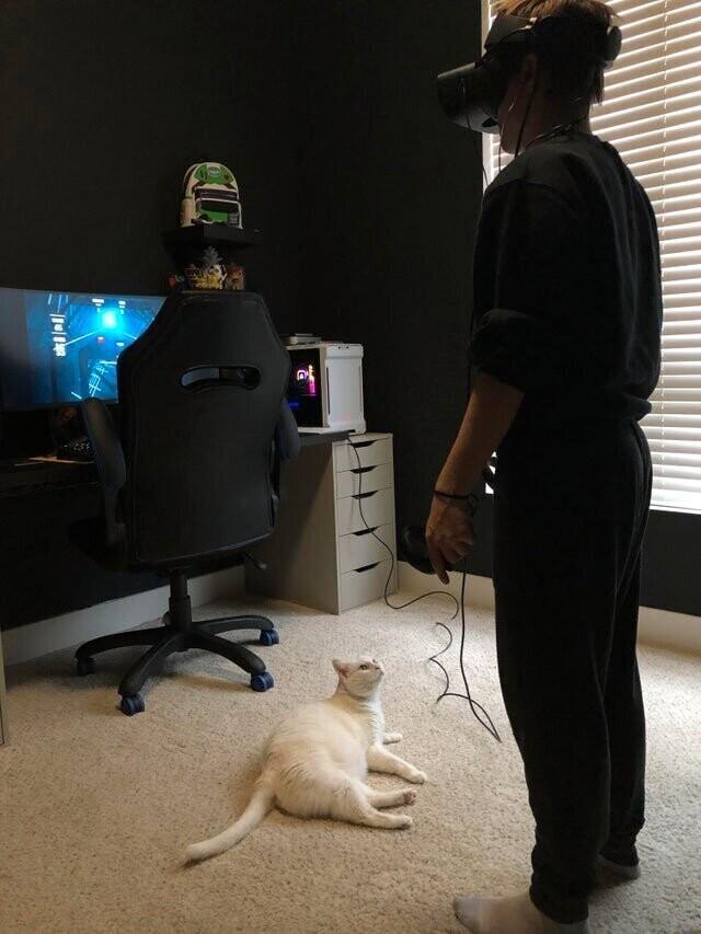 Виртуальная реальность в присутствии кота - не самая лучшая идея