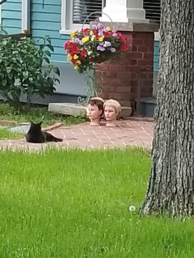 Пожалуй я больше не пойду к соседке