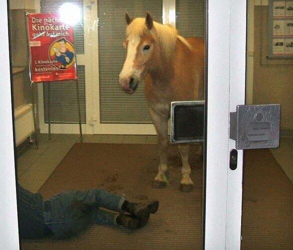 Видимо, он лошадей никогда не видел
